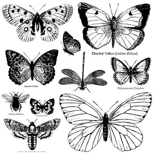 """Butterflies Decor Stamp 12""""x12"""""""