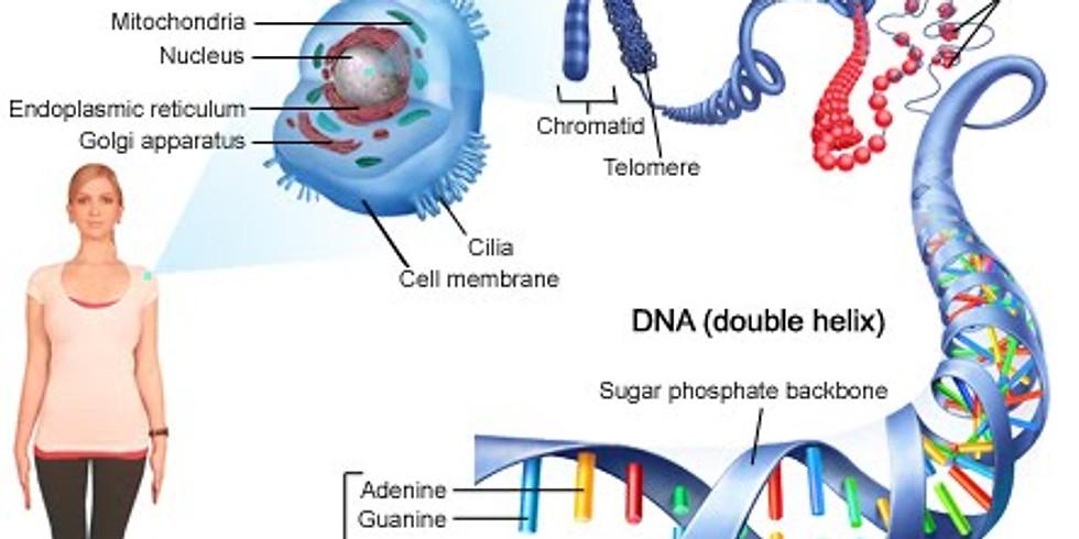 DNA - The Basis of Life