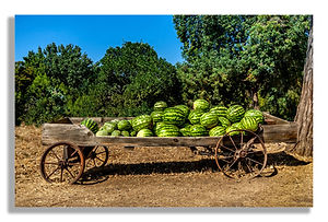 Watermelon in wagon.jpg