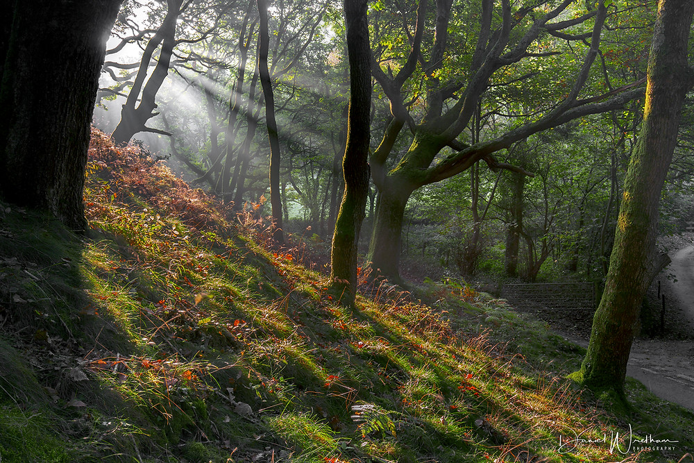 sun rays light sunrise forest daniel wretham photography landscape wales