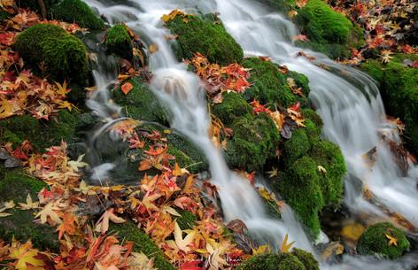 Long Exposure Leaves
