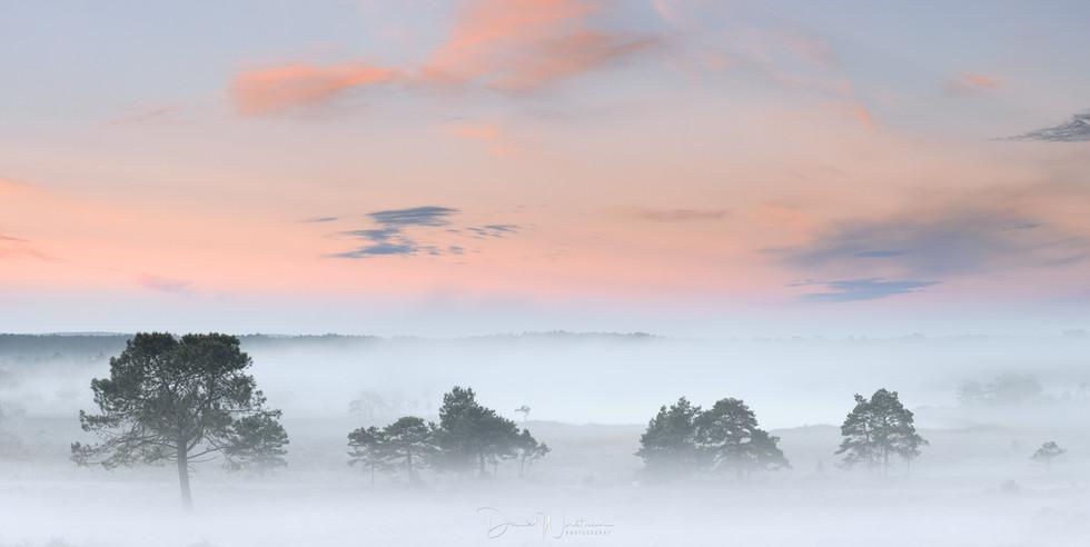 Dorset Mist