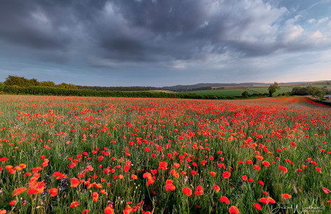 Stormy Sky Over Poppy Fields