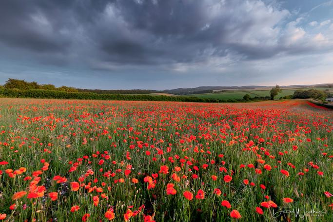 Stormy Sky Over Poppy Fields
