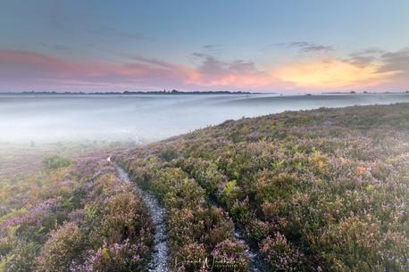 New Forest Misty Sunrise