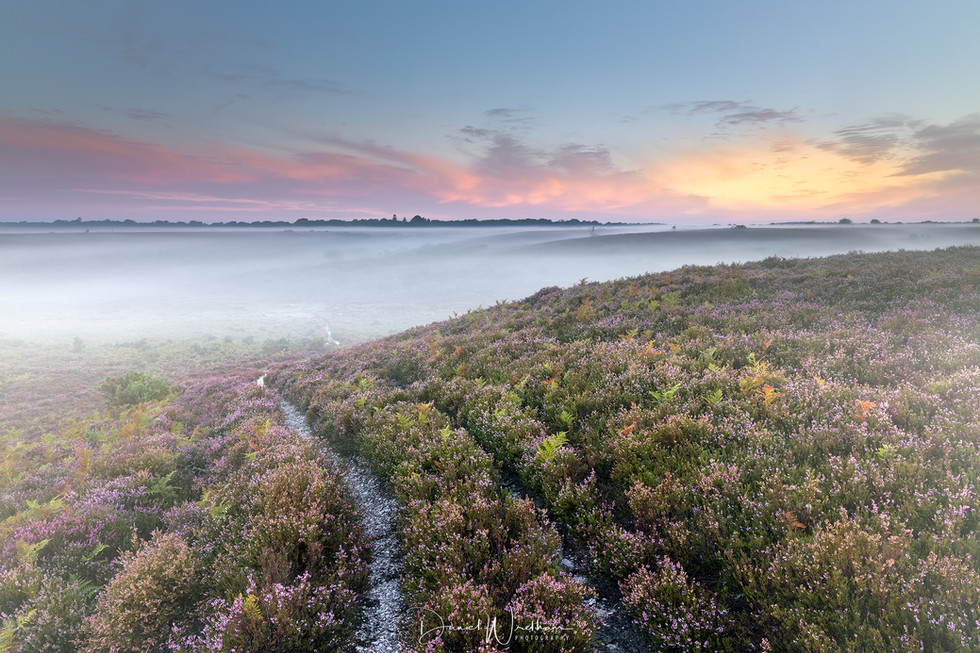 New Forest Misty Sunrise