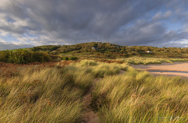 Pembrokeshire Gold