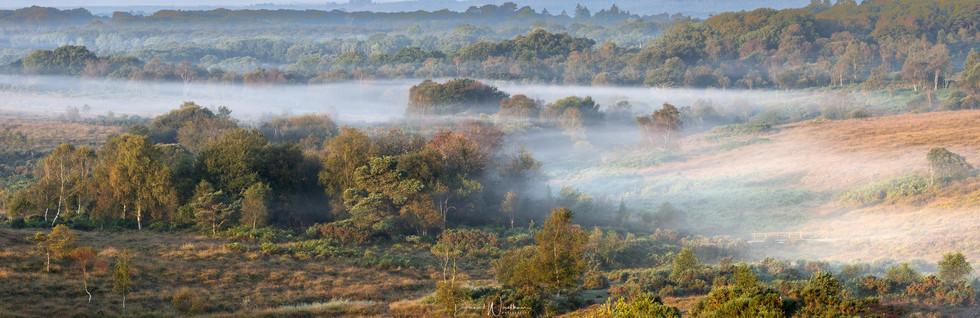 New Forest Dawn