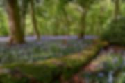 Berkshire & Oxfordshire Landscape photography