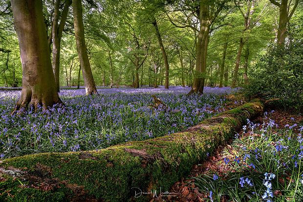 Berkshire-Oxfordshire-Landscapes.jpg