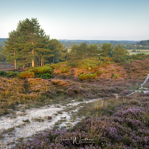 The Heather Trail