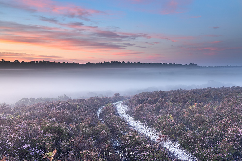 New Forest Sunrise