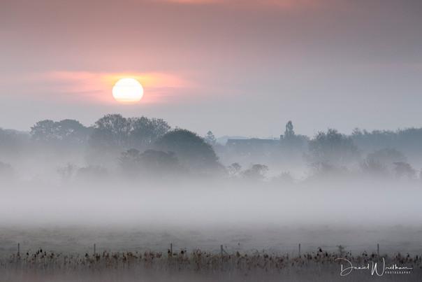 Misty Meadow