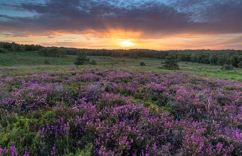 Canford Heath Sunset