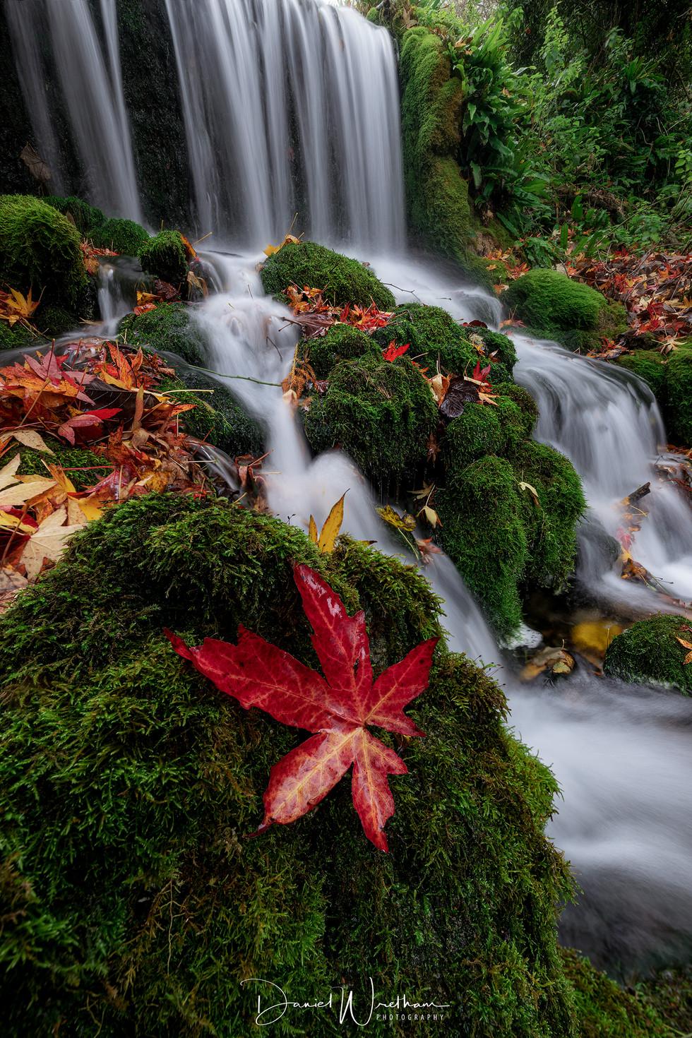 Autumn at Littlebredy