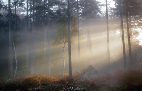 Transient Light