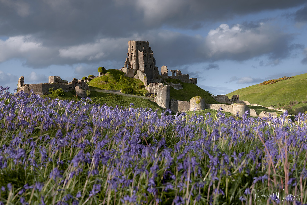 Corfe Castle Bluebells