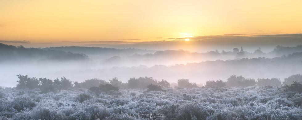 New Forest Sunrise (Panorama)
