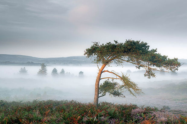 Dorset-Misty-Vistas.jpg