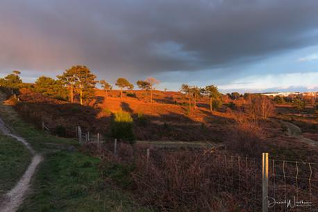 Last Light on Canford Heath