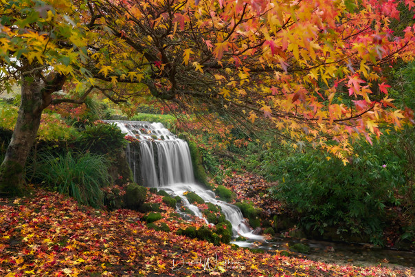 Littlebredy Autumn Waterfall