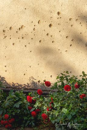 Bullet Holes & Flowers