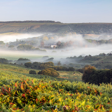Mist on the Heath