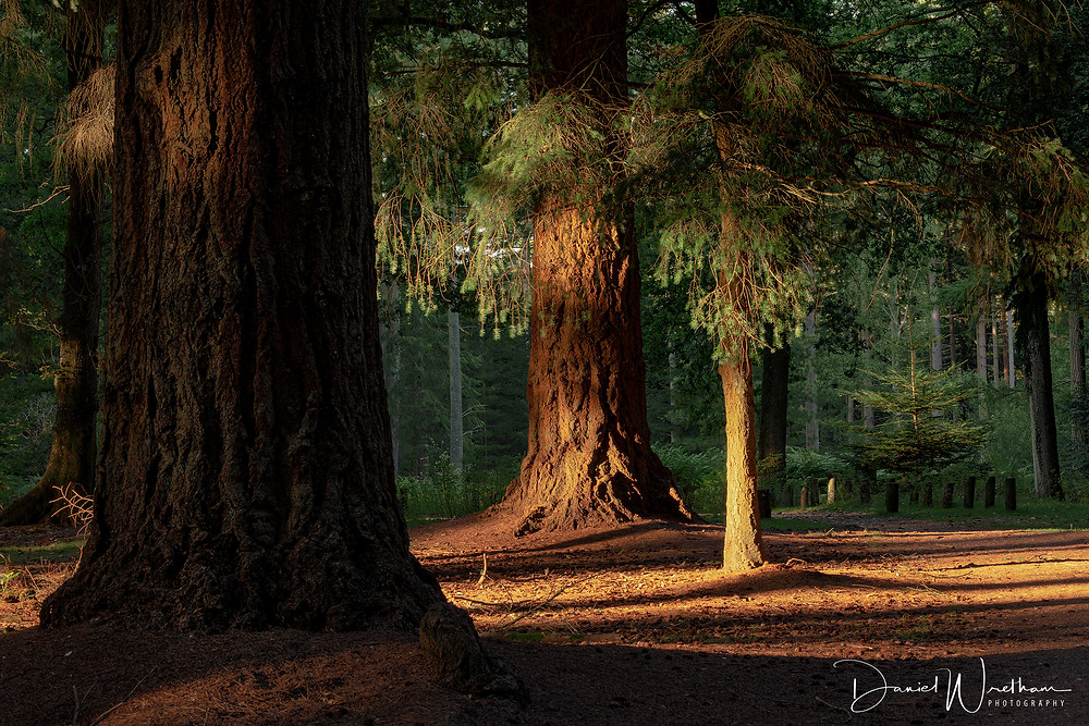 The New Forest, Light, Landscape Photography