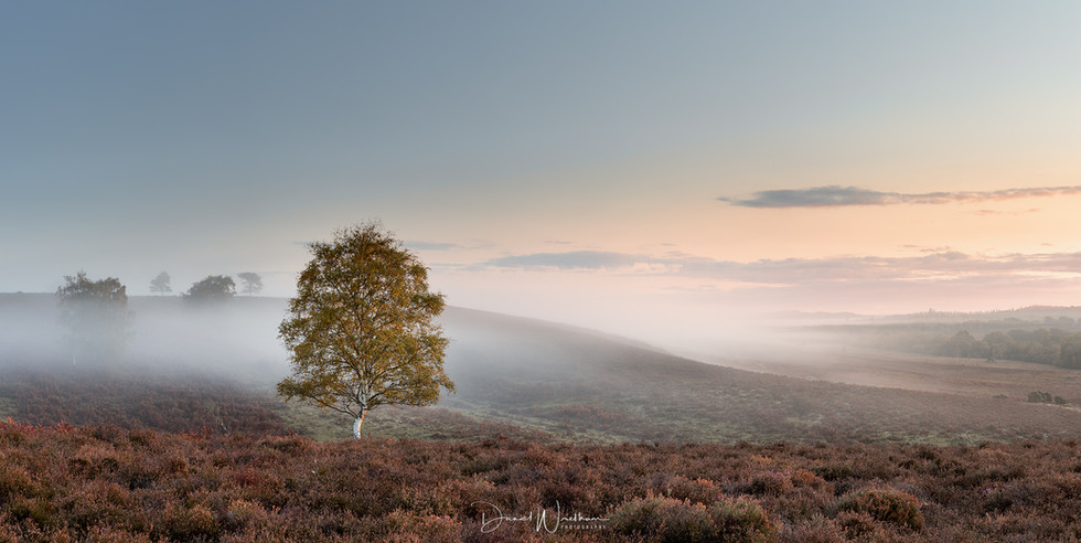 New Forest Morning Light