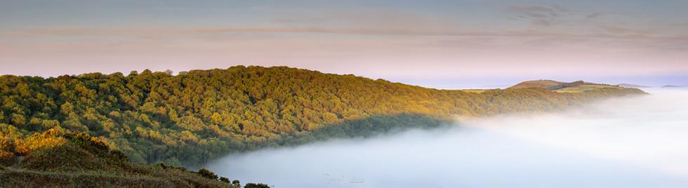 Dorset Misty Morning