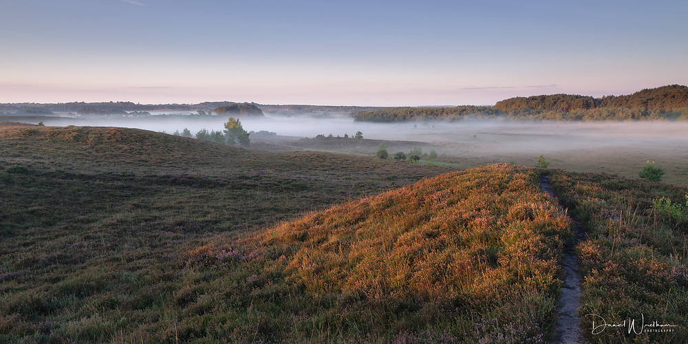 The New Forest Mist, landscape photography