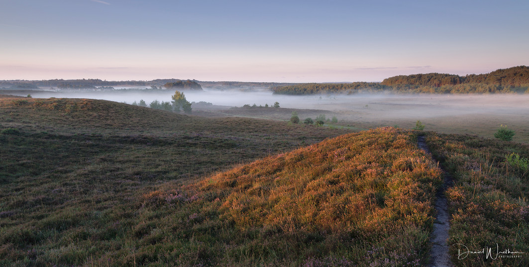 First Light at The New Forest