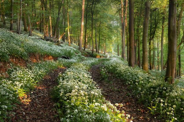 Dorset-Fields-Forest-Flowers.jpg