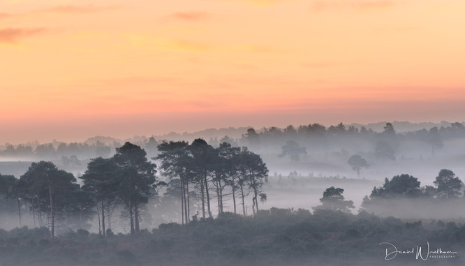 Hampshire Mist