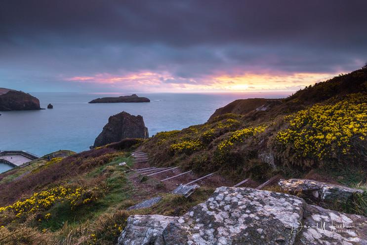 Cornish Gold