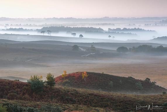 Mist & Light