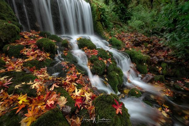 Fall...._