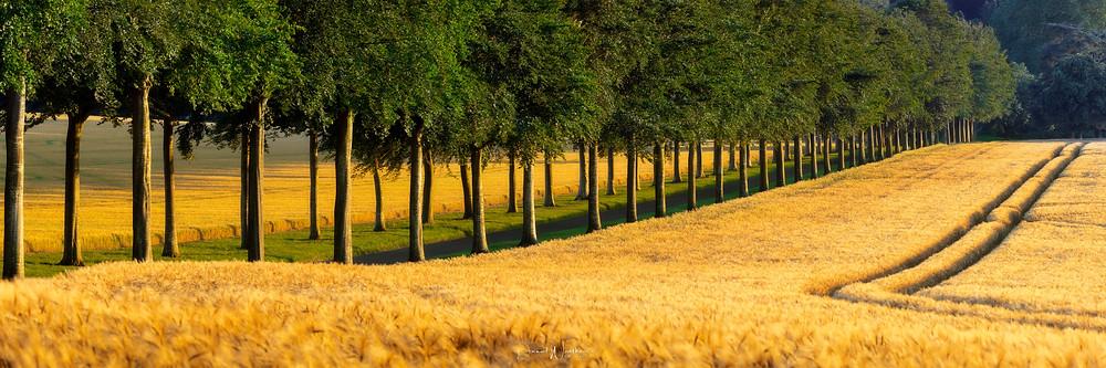 Moor Crichel trees
