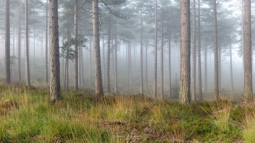 Light & Fog Panorama