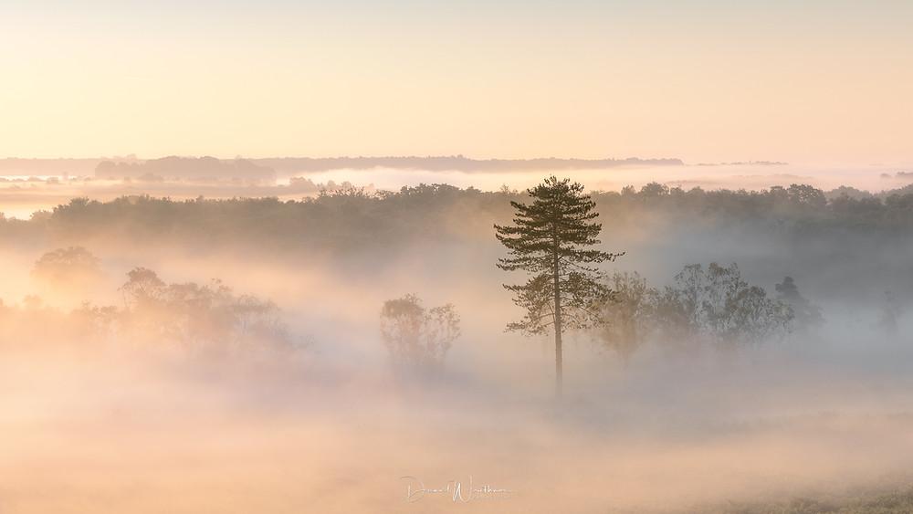 Dawn-Mist