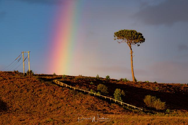 Canford Heath Rainbow