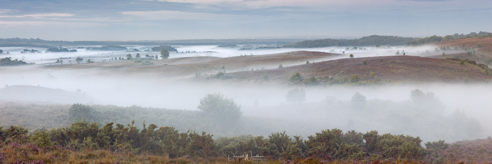 New Forest Misty Panorama