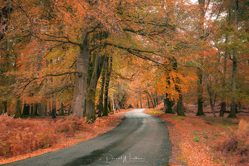 Autumn new forest