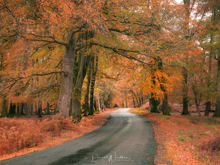 Photographing The New Forest