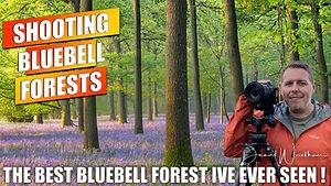 Bluebell Thumb.jpg