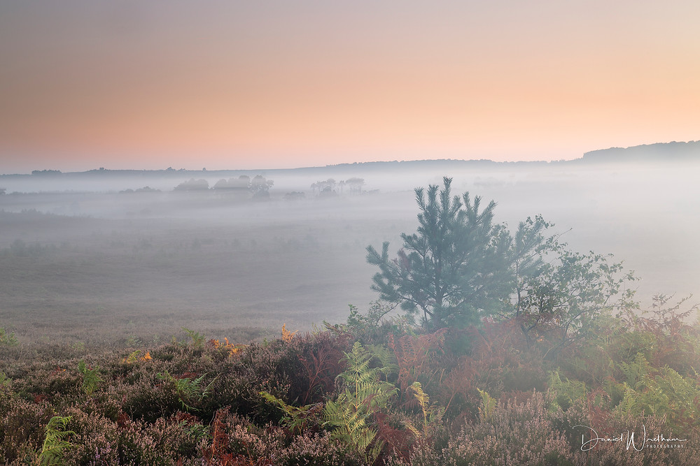 New Forest <ist, Hampshire Landscape Photographer