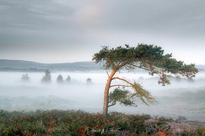 Lone Tree Light