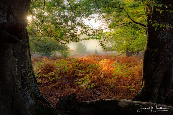 Natures Frame