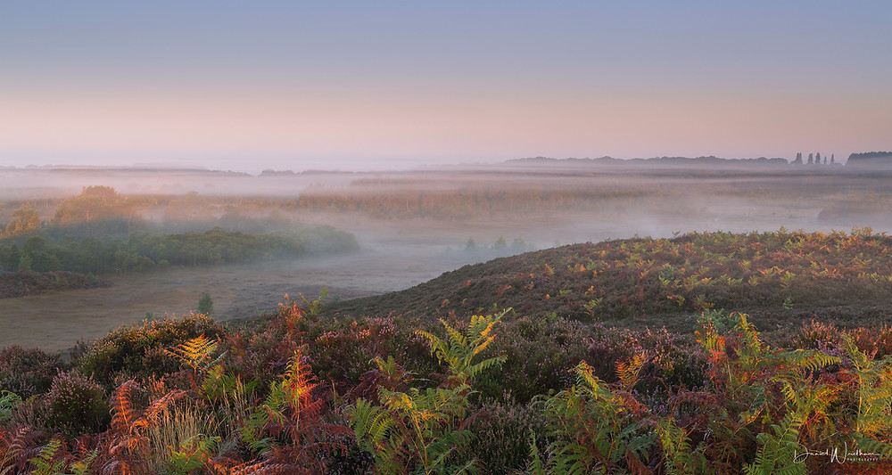 New Forest Landscape photography