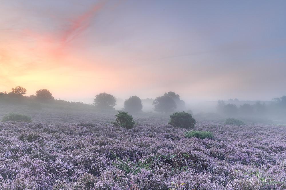 Sunrise over heather